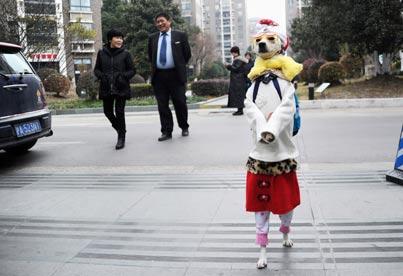 מסביב לגלובוס -הכלבה עושה שוק / צילום: רויטרס