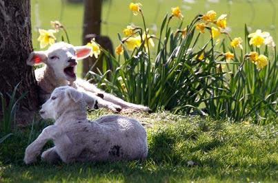 מסביב לגלובוס - אביב אנגלי / צילום: רויטרס