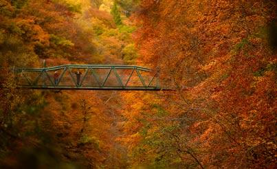 מסביב לגלובוס - צבעים של סתיו / צילום: רויטרס