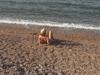 שלוות סיני המפורסמת על החוף בביאר סוויד / צילום: באדיבות שרה גלב
