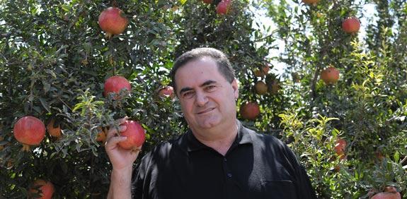 ישראל כץ/ צילום: זיגי