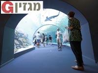 בריכת הכרישים באילת/ צילום באדיבות יחצ פארק המצפה התת ימי