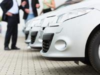 החבר החדש שלכם  / צילום: Shutterstock/ א.ס.א.פ קרייטיב