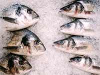 דגים קפואים / צילום: Shutterstock