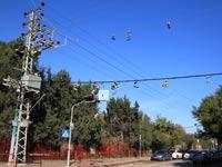 זוגות נעליים על הכבלים / צילום: חברת החשמל, יוסי ויס