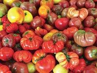 עגבניות מעוותות / צילום:  Shutterstock/ א.ס.א.פ קרייטיב