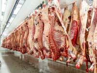 בית מטבחיים / צילום: צילום:Shutterstock/ א.ס.א.פ קרייטיב