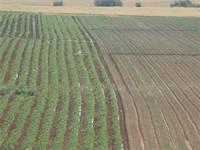 חקלאות בעמק האלה/ צילום: איל יצהר