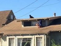 צפו: הסתתרה על הגג חצי עירומה בזמן שגנב פלש לבית