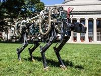 """פיתוח חדש ופורץ דרך: רובוט ה""""צ'יטה"""" שנחשף בארה""""ב"""