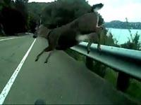 וידאו חם ברשת: תאונת דרכים כזו עוד לא ראיתם