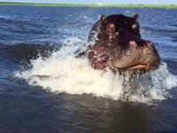 ויראלי ברשת: תיעוד של היפופותם תוקף תיירים על סירה