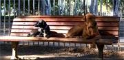 חדש בישראל: אפליקציה שימושית במיוחד לבעלי כלבים