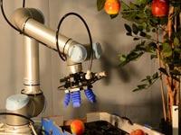 רובוט חקלאות / צילום: מתוך הוידאו
