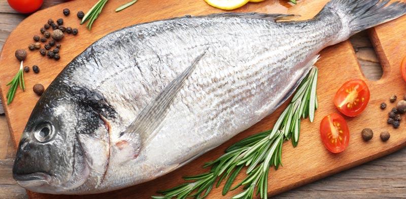 דגים טריים/ צילום: שאטרסטוק