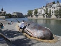 לוויתן בפריז/ צילום: מהוידאו