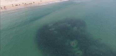 צפו: כשתראו את הסרטון הזה תבינו למה פינו מיד את החוף