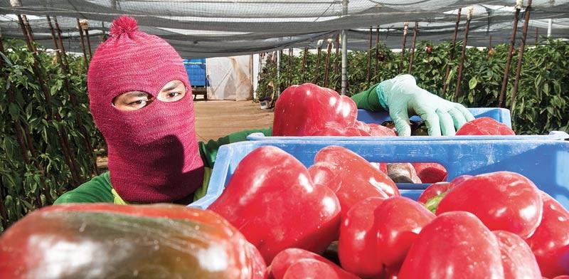 """החקלאים: """"ביטול המס מתקן עוול של שנים, אבל זה מאוחר מדי"""""""