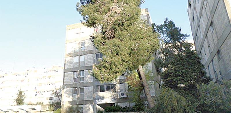 דירה בת 3 חדרים, בירושלים, ברחוב הארזים בשכונת בית הכרם / צילום: יחצ