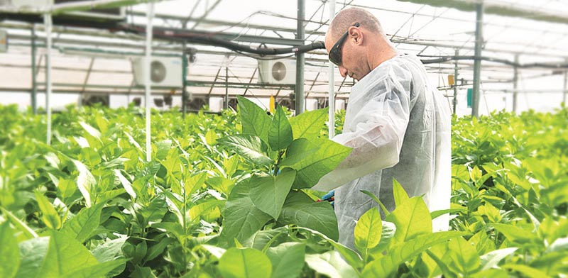 CollPlant tobacco greenhouse, photo:PR