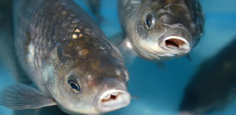 איך הדגים שומרים על איכות מי השתייה שלנו?