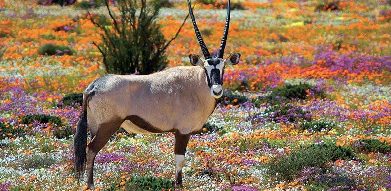 נמקוואלנד, דרום אפריקה / צילום: Shutterstock | א.ס.א.פ קריאייטיב