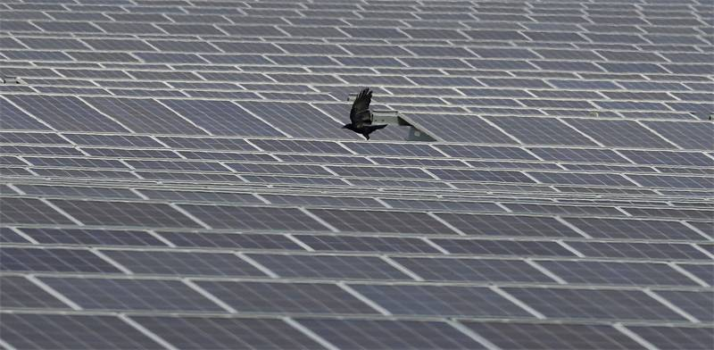 Solar farm Photo: Reuters