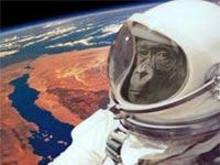 איראן שולחת קוף לחלל / מתוך: צילום מסך