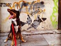 הכלב שוקו על רקע גרפיטי / צילום: גילי יובל