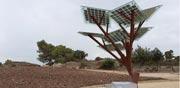 עץ סולארי / צילום מסך