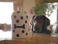 כלב וצנצנת עוגיות / מתוך: צילום מסך יוטיוב
