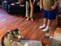 דו שיח בין כלב ובעליו / מתוך: צילום מסך יוטיוב