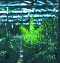 סחר בסמים ברחבי הרשת  / אילוסטרציה: shutterstock, שאטרסטוק