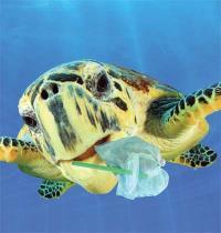 צב ים עם קשית תקועה בפיו/ צילום:  Shutterstock א.ס.א.פ קריאייטיב