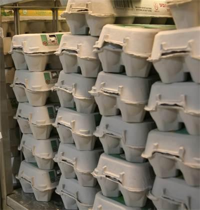 תבניות ביצים / צילום: עינת לברון