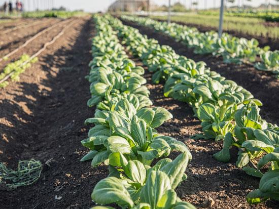 חוות בארותיים של שי שבח / צילום: ענת פייזר