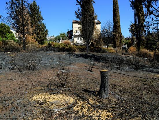 נוף הגליל. שריפת היער הגדולה ביותר בגליל התחתון זה 30 שנה / צילום: איל יצהר