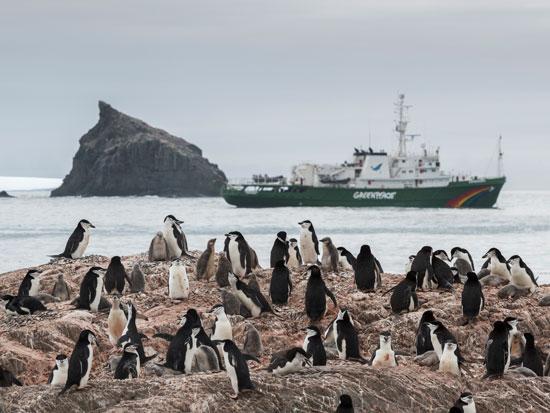 פינגווינים באנטרקטיקה. הלשלשת שלהם היא היחידה שאפשר לראות מהחלל / צילום: Abbie Trayler-Smith, Christian ?slund - Greenpeace
