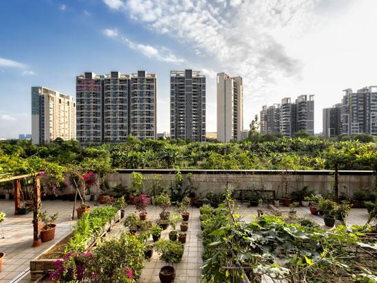 גינה אורבנית ברובע גואנגזו בסין. מחזור גידולים מגוון וחיסכון גדול במים / צילום: רויטרס - Shutterstock | א.ס.א.פ קריאייטיב