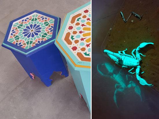 ספארי עקרבים לילי וסדנה לציור על רהיטים בנוסח מרוקאי / צילום: אורלי גנוסר