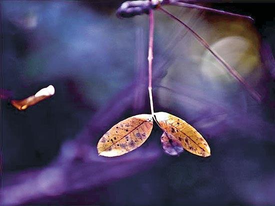 נועם הנגבי/ צילום: יחצ