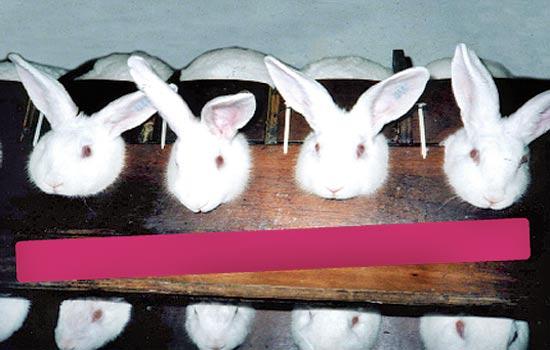 ארנבונים בסד / צילום: AAPEA