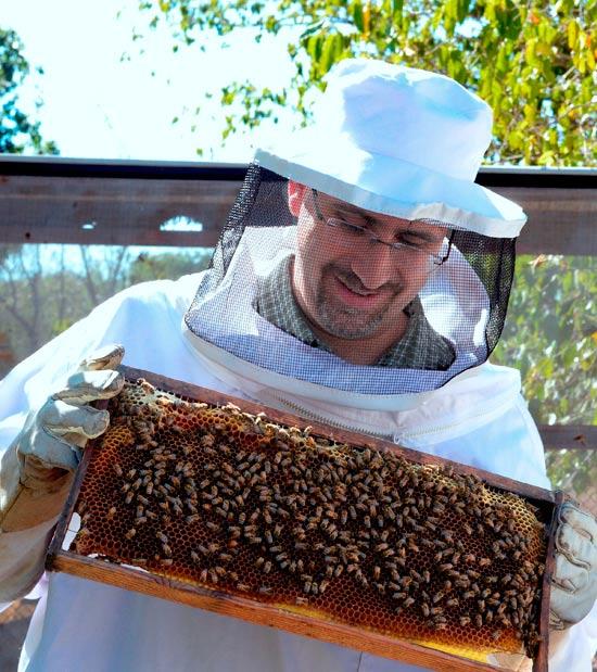 דן שפירו והדבורים / צלם: מתי שטרן