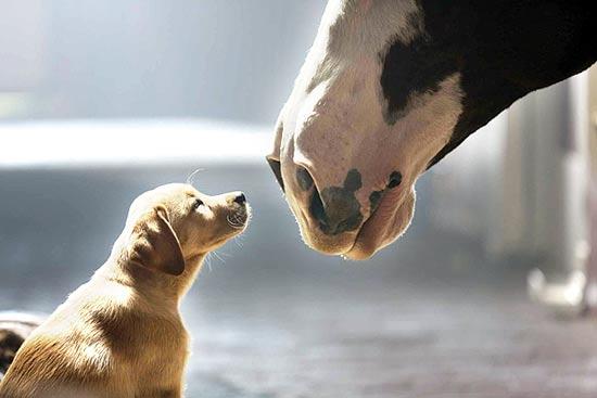 הפרסומת של באדוויזר/ צילום:יחצ