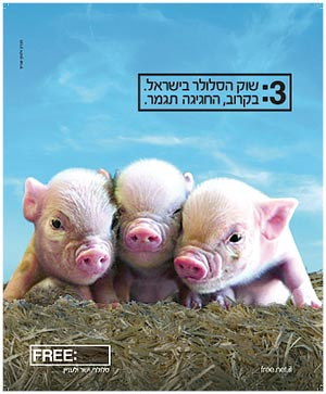 מודעת החזירים