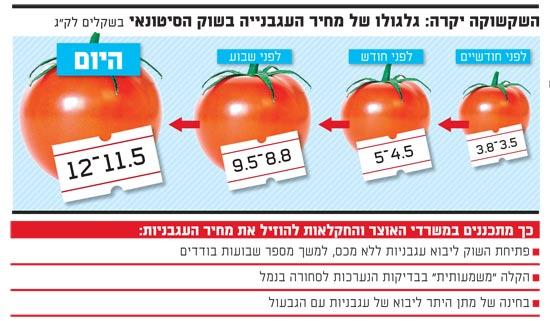 גלגולו של מחיר העגבניה בשוק הסיטונאי