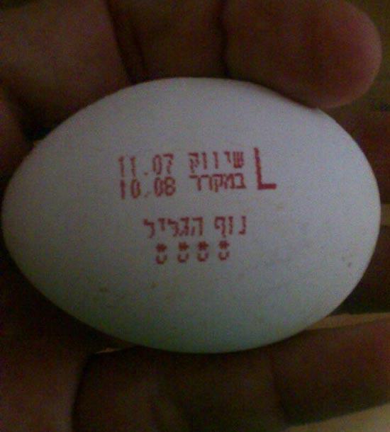 ביצים המזויפות / צילום: המועצה לענף הלול