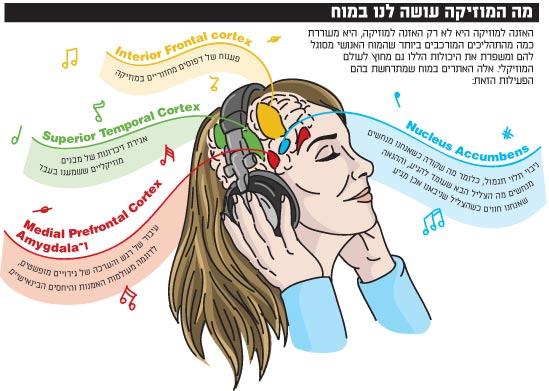 מה המוזיקה עושה לנו במח