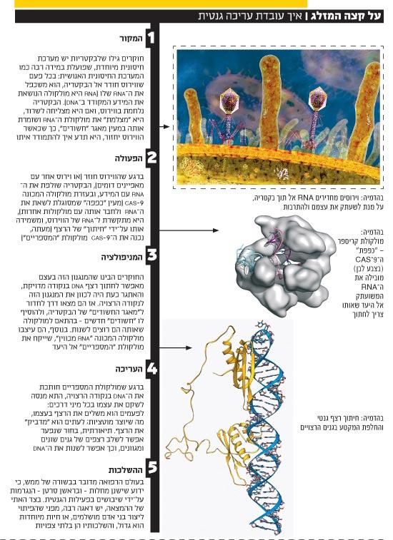 על קצה המזלג / איך עובדת עריכה גנטית