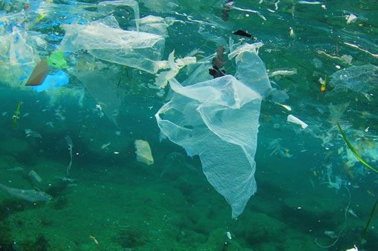 שקיות ניילון מזהמות / צילום: Shutterstock/ א.ס.א.פ קרייטיב